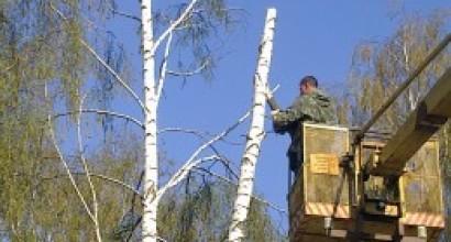 Удаление дерева с использованием АГП-18