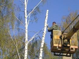 удаление дерева в с. Федоровка 9 Мая